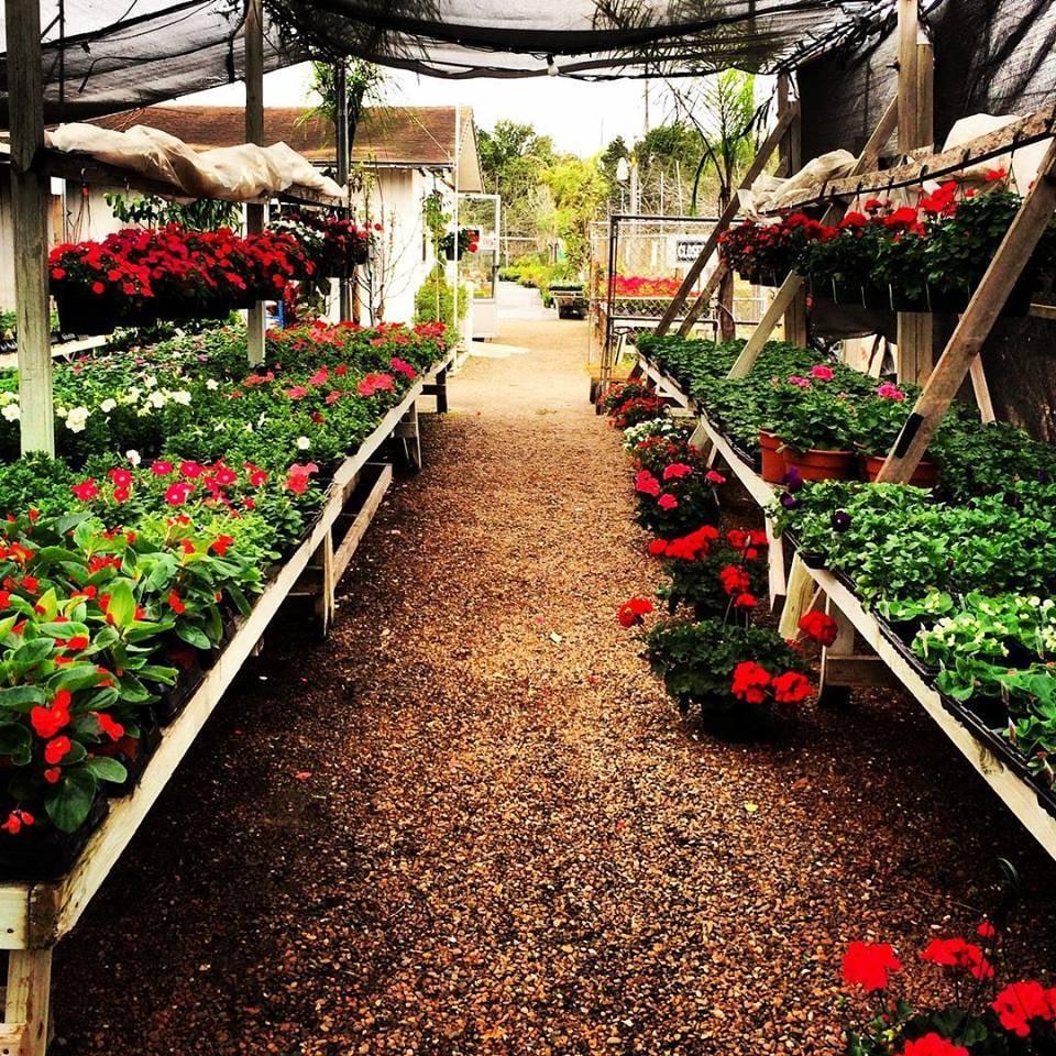 Photos For Tony S Nursery Yelp