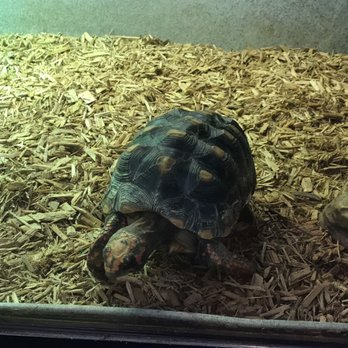 Underground Reptiles - 151 N Powerline Rd, Deerfield Beach