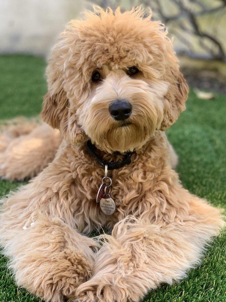 K-9 Companions Dog Training: 13703 J J Ln, Perris, CA