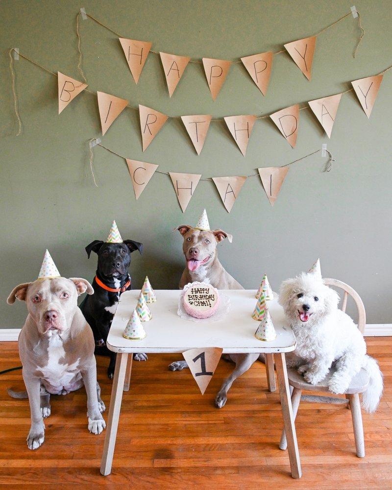 The Dog Bakery: 12112 Venice Blvd, Mar Vista, CA