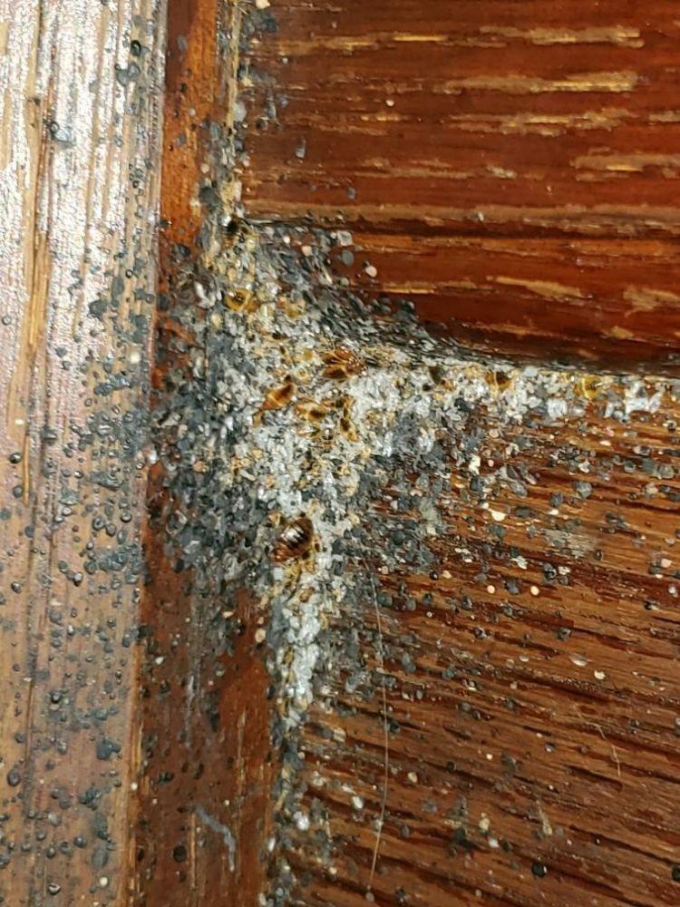 One STOP Pest Control: Cincinnati, OH