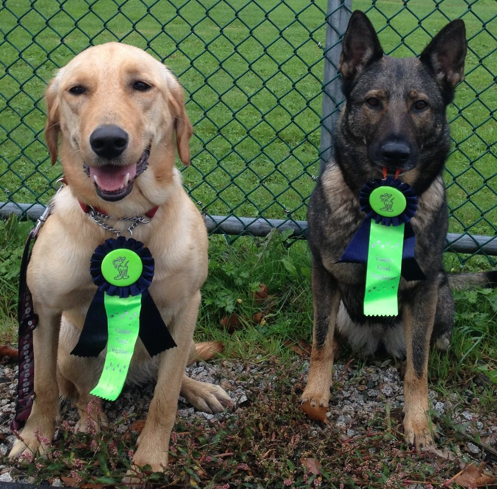 K  Best Behaviour Dog Training Burnaby Bc