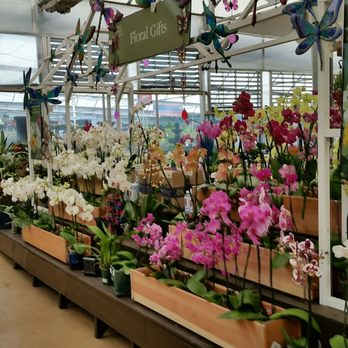 Photo Of Pike Nurseries Atlanta Ga United States Orchids
