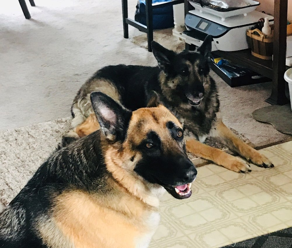 Ferndale Veterinary: 1140 Van Ness Ave, Ferndale, CA