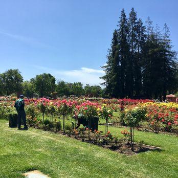 San Jose Municipal Rose Garden 2148 Photos 331 Reviews