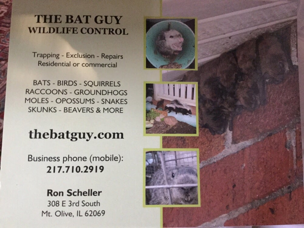 The Bat Guy: 308 E 3rd S, Mount Olive, IL