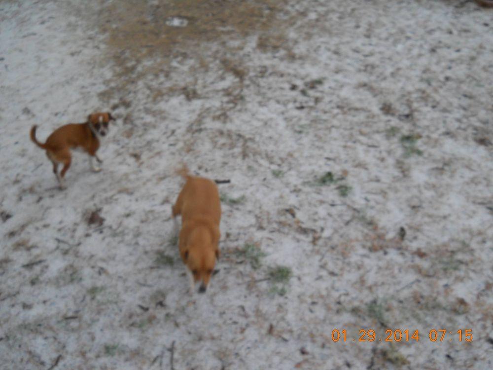 Crestview Kennels: 6037 Robin Rd, Crestview, FL