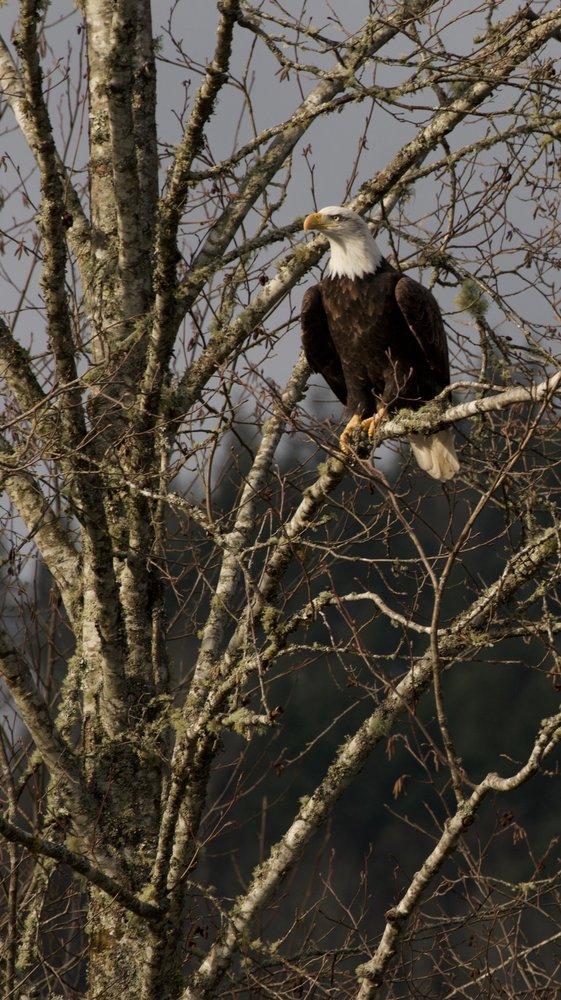 Skagit River Guide Service: 52921 Rockport Park Rd, Rockport, WA