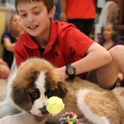 Puppies N Love 200 Photos 61 Reviews Pet Stores 4550 E