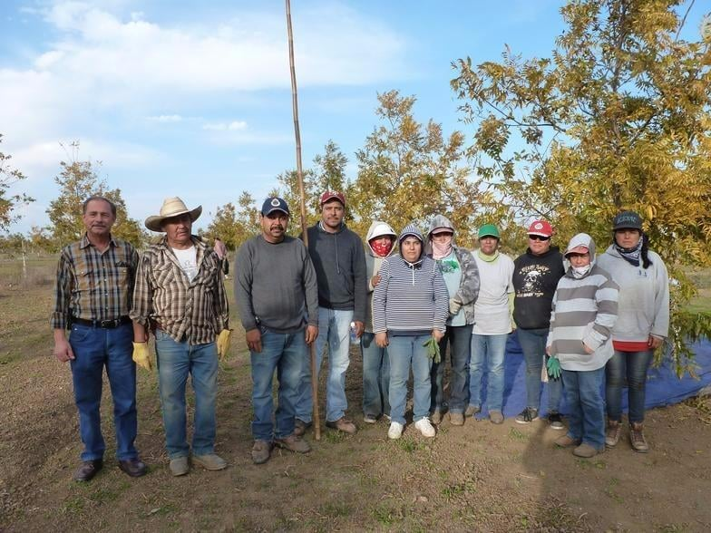 Jeffreys Ranch Pecans: 2250 Lone Star Rd, Williams, CA