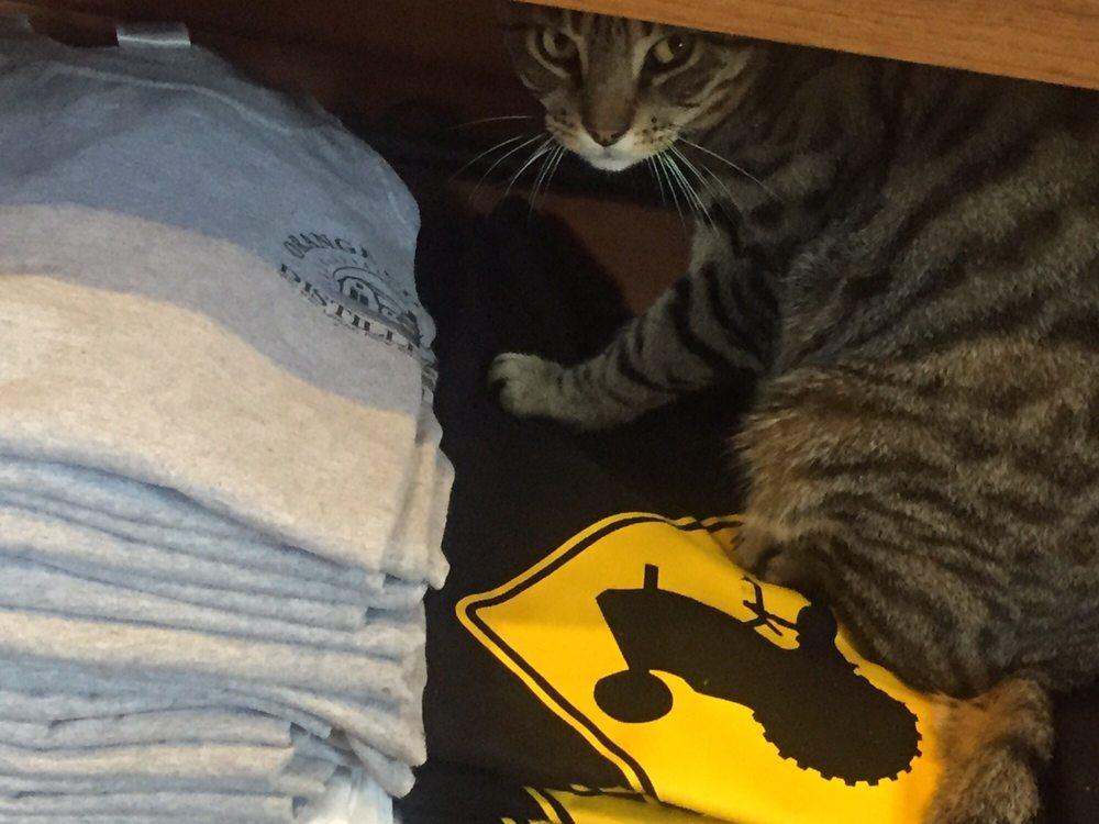 Goshen in pussy — 6