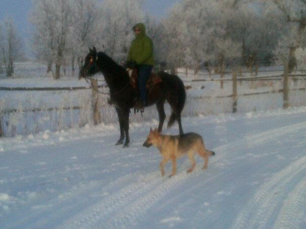 North Forty Stables: 8801 Highway 83 N, Minot, ND