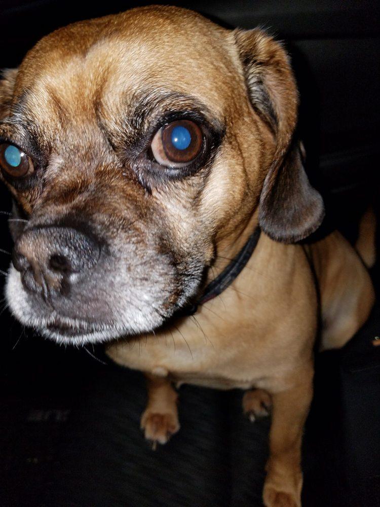 Island Puppies - 64 Photos & 11 Reviews - Pet Stores - Holbrook, NY