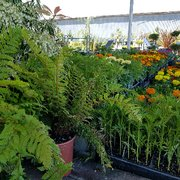 This One Photo Of Mid City Nursery American Canyon Ca United States