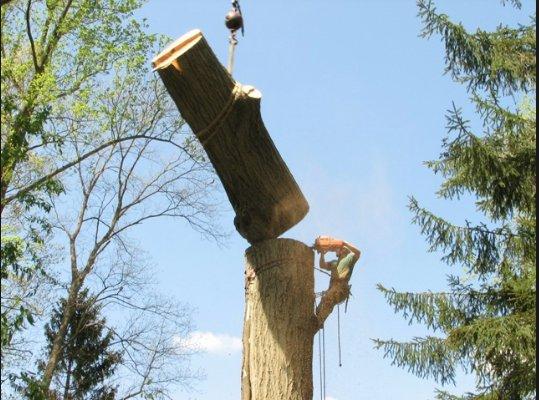 Un-Limb- It Tree Service: 12958 W Waverly, Beach Park, IL