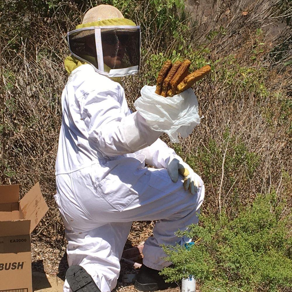 Green Flash Pest & Termite Control