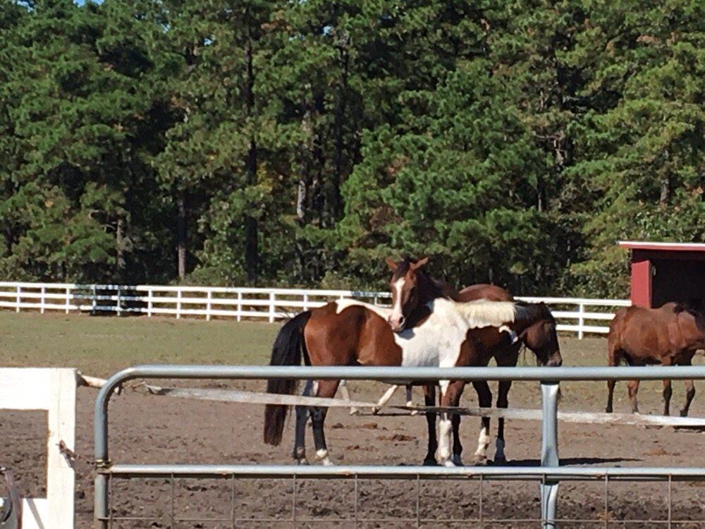Split Elm Equestrian
