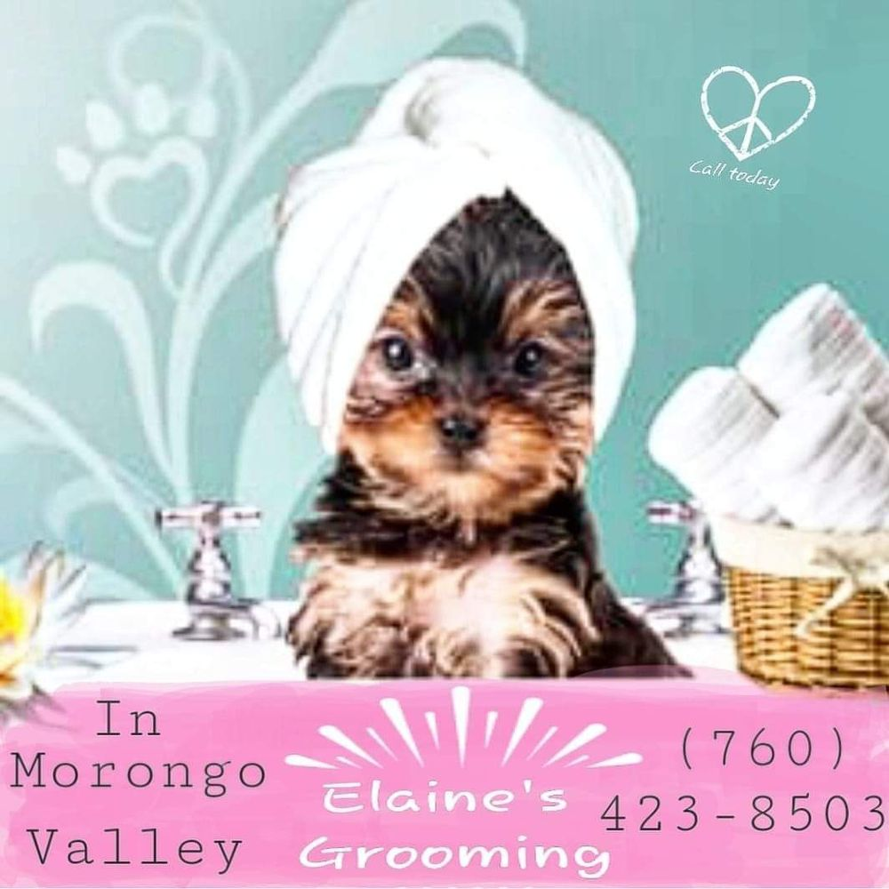 Elaine's Grooming: 11024 Knobb Ave, Morongo Valley, CA