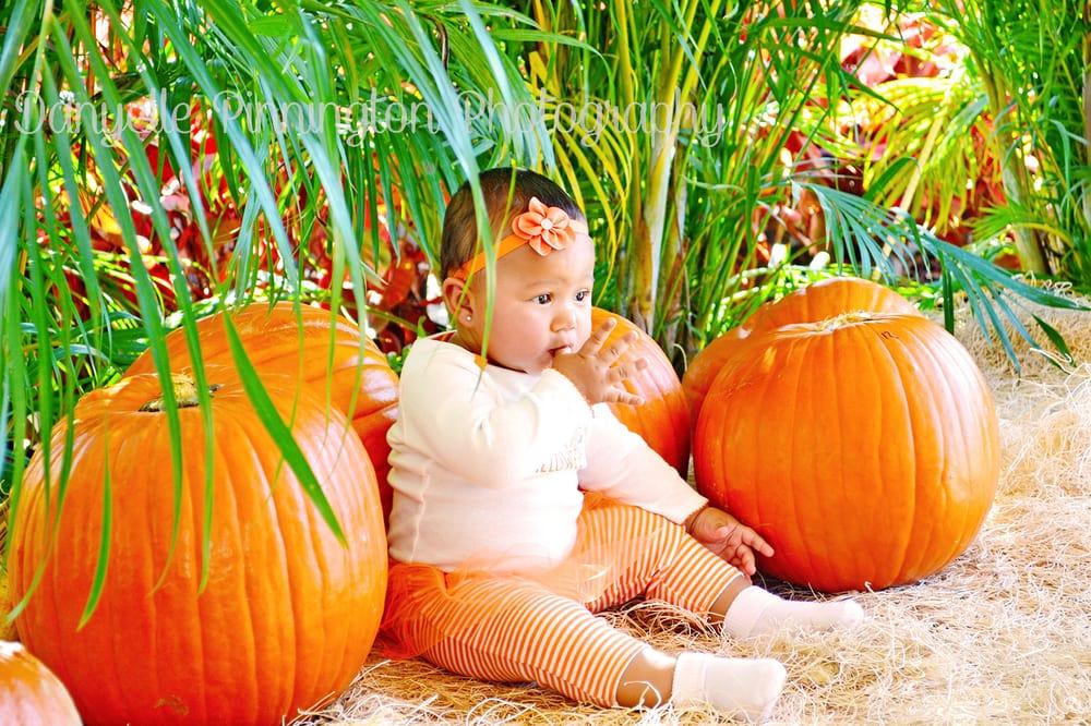 Photo Of Danyelle Pinnington Photography Sunrise Fl United States Fall Festival Pumpkin