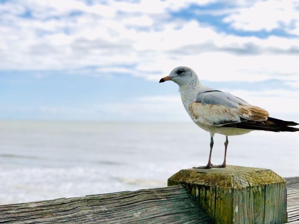 Folly Beach Pier: 101 E Arctic Ave, Folly Beach, SC