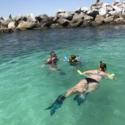 Photo Of Dolphin And Snorkel Tours Panama City Beach Fl United States