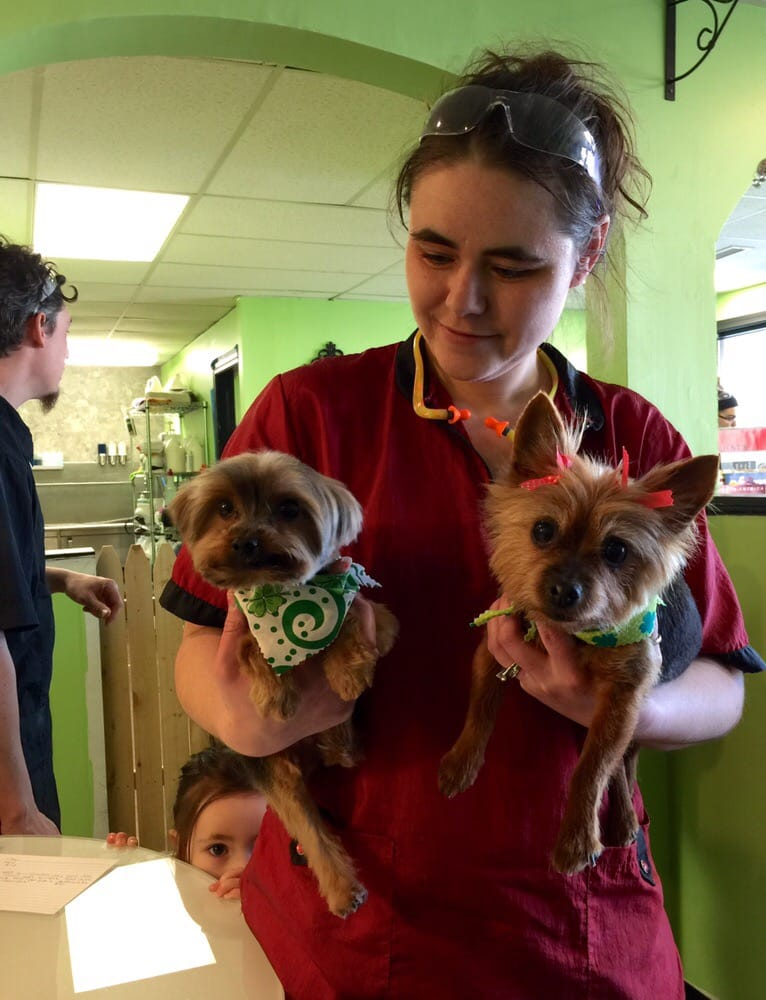 Classic Dog Grooming: 190 Flanders Rd, East Lyme, CT