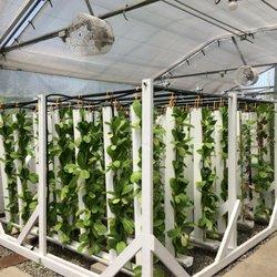 The Growing Experience Urban Farm - 50 Photos - CSA - 750