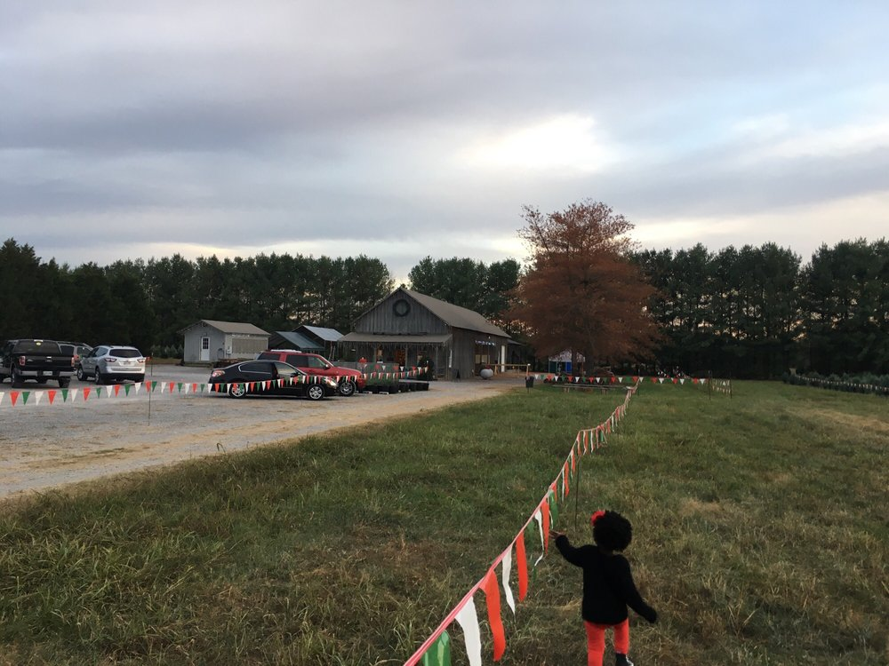 Christmas Tree Farm Murfreesboro Tn