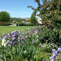 Photo Of Western Colorado Botanical Gardens   Grand Junction, CO, United  States. Iris