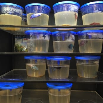 Walmart supercenter 21 photos 30 reviews grocery for How much are betta fish at walmart