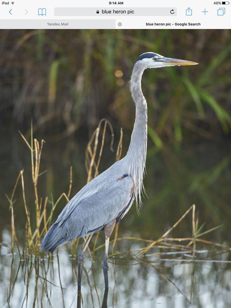 Borel's Swamp Tours: 1209 Rookery Rd, Breaux Bridge, LA
