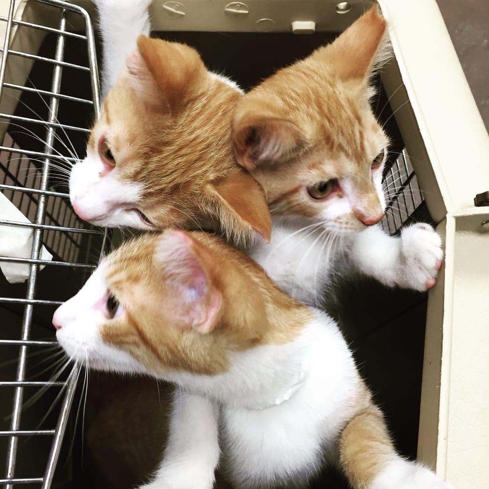 Alley Cat Rescue Cincinnati