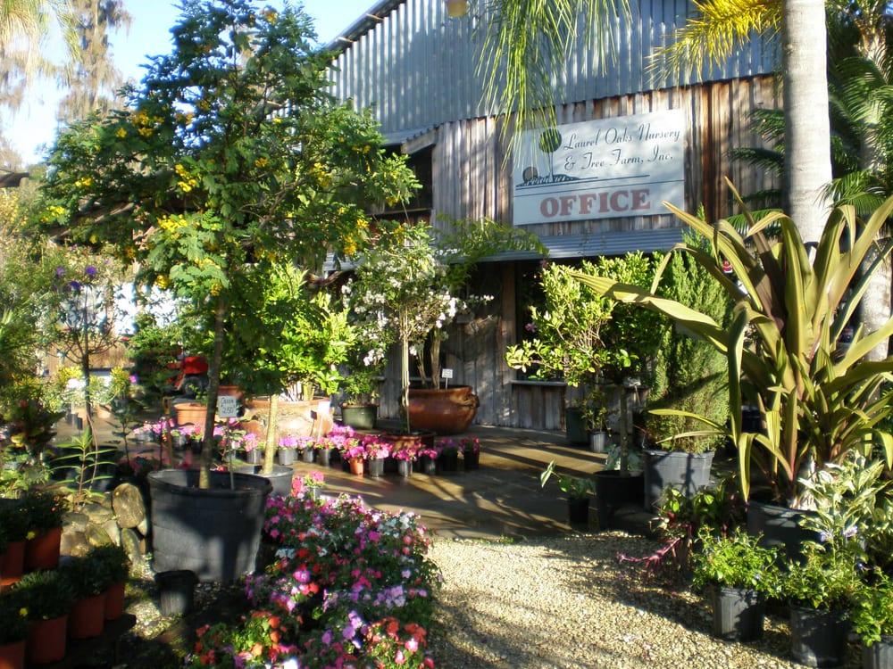 Laurel Oaks Nursery And Tree Farm Yelp