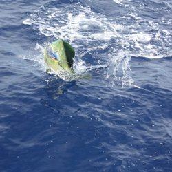 Top 10 Best Manta Ray Night Snorkel in Honolulu, HI - Last