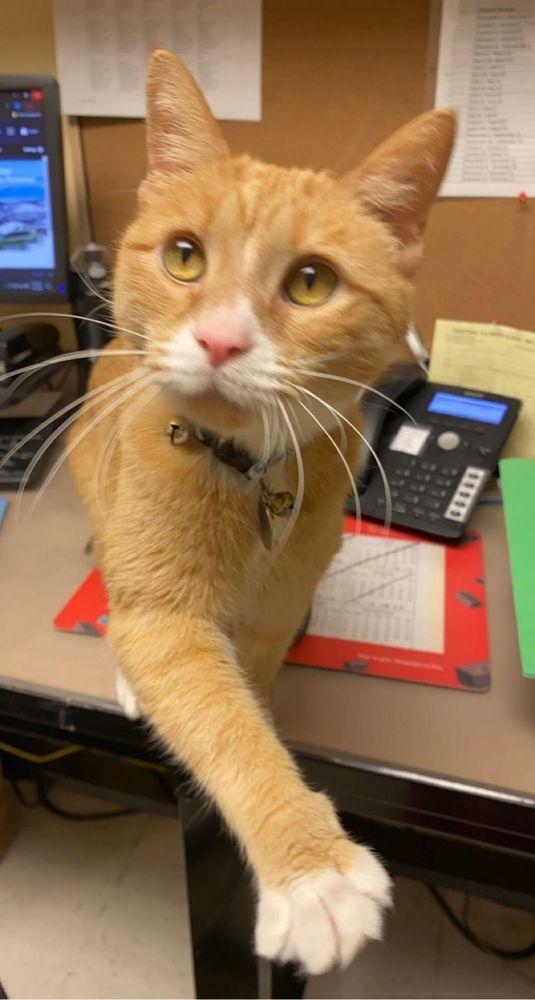 Shirkey Veterinary Clinic: 135 S Broadway St, Coal City, IL