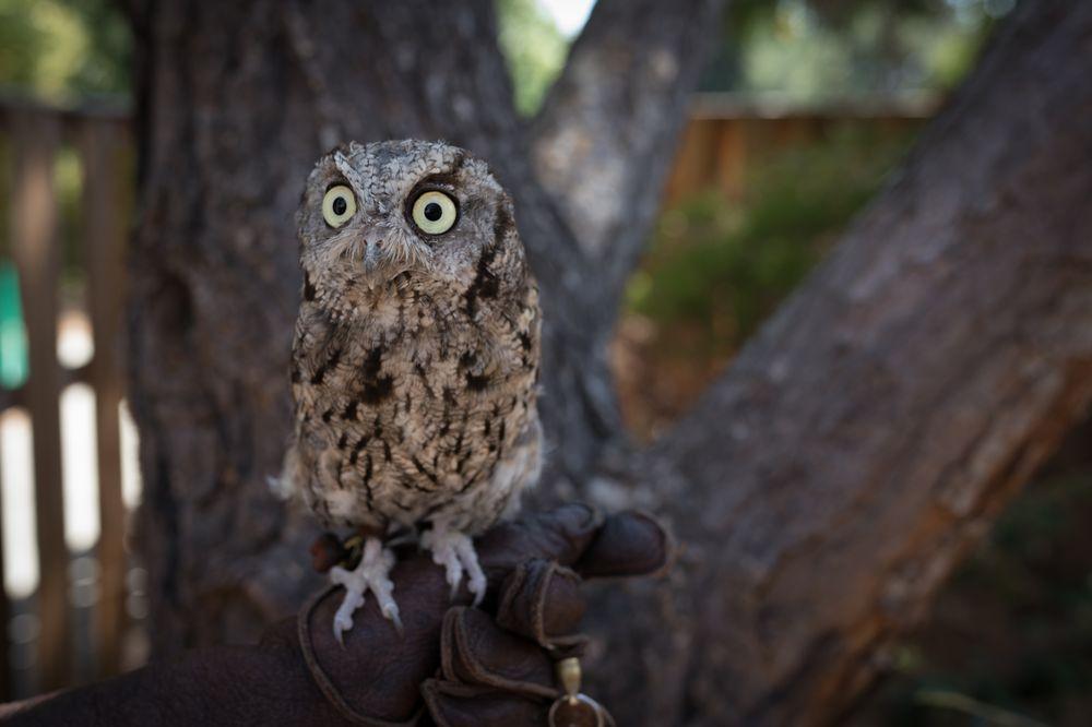 Lindsay Wildlife Experience: 1931 1st Ave, Walnut Creek, CA