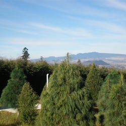 Horario del bosque de los arboles de navidad