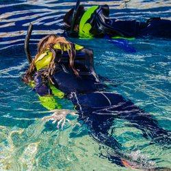 St Augustine Aquarium 32 Photos 27 Reviews Aquariums