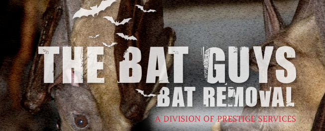 The Bat Guys Bat Removal: Canby, MN