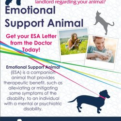 photo of emotional support animal esa doctors garden grove ca united states