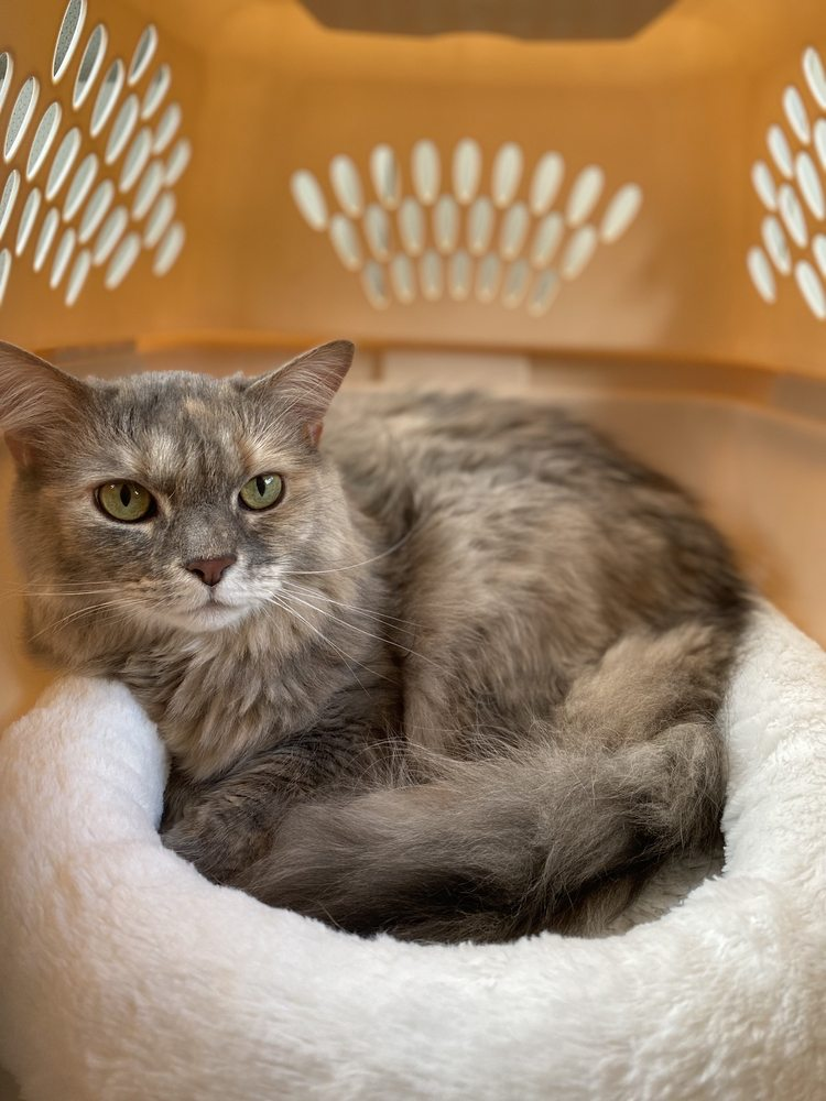 Compassion Veterinary Center: 3540 Worthington Blvd, Frederick, MD