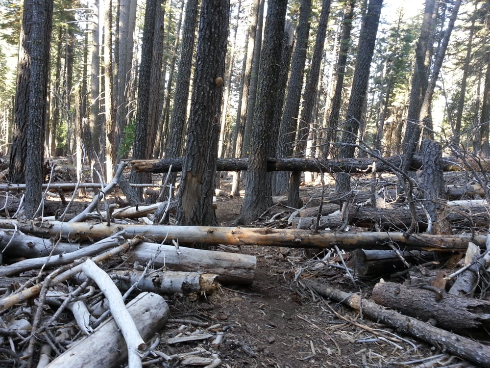 Heart Lake in-and-back Hike: Lassen National Forest, Mineral, CA
