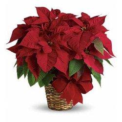 7726b02b692c Jimmy s Flower Shop - 11 Reviews - Florists - 2840 N Hill Field Rd ...