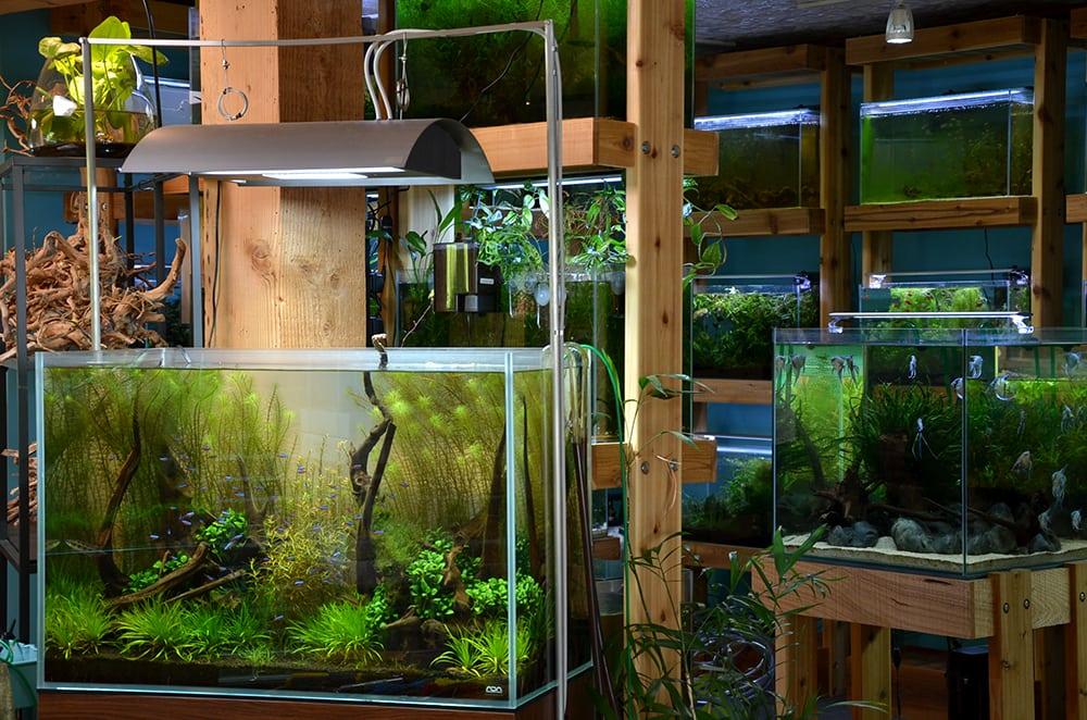 A view of one of aquarium zen 39 s display aquariums towards for Fish tank supplies near me