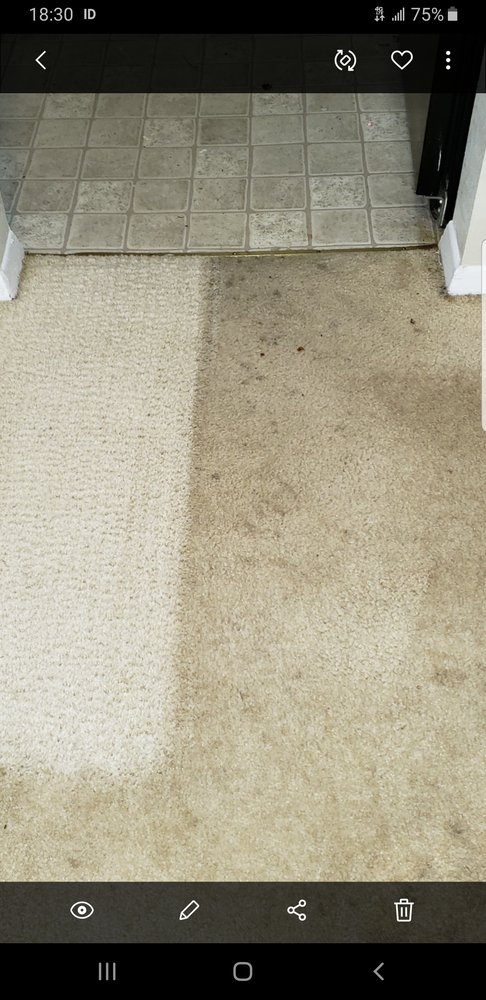 Albert's Carpet Cleaning