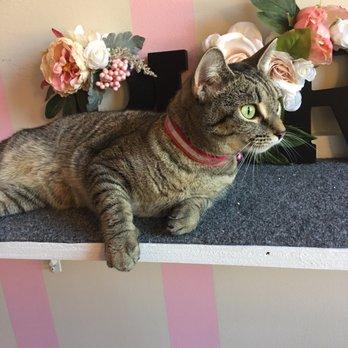 Cat Adoption Annapolis Md