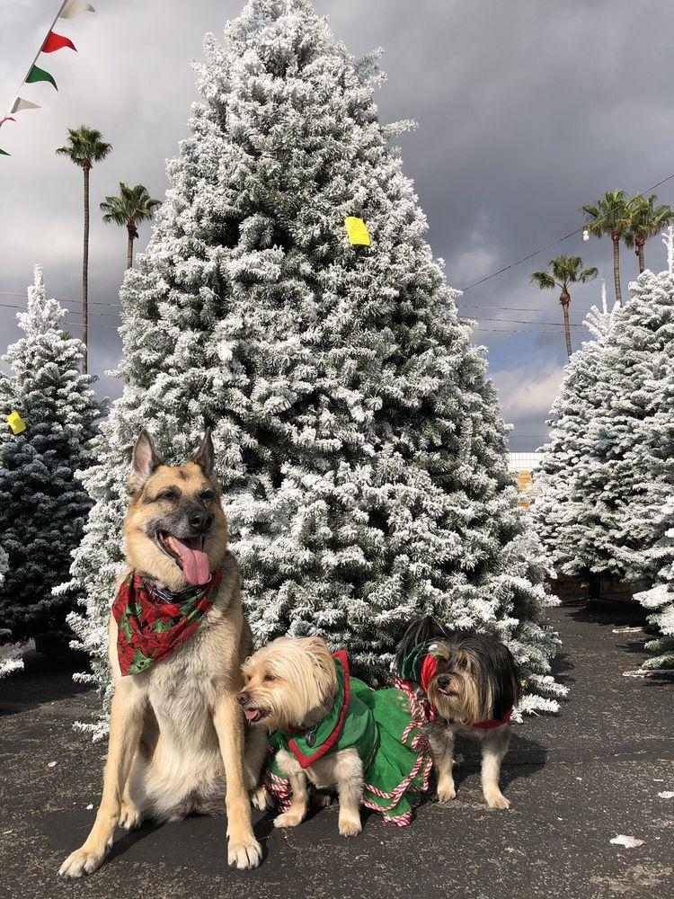 Tree Kings Christmas Tree Lot: 8150 LaPalma Ave, Buena Park, CA