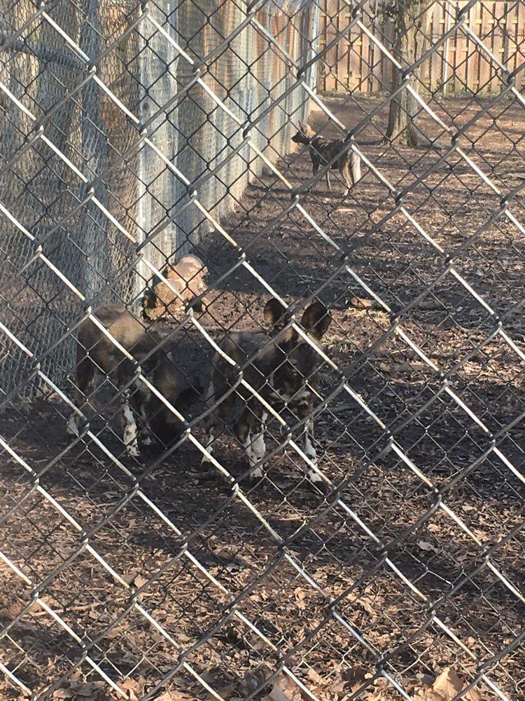 Endangered Wolf Center - 22 Photos & 20 Reviews - Community