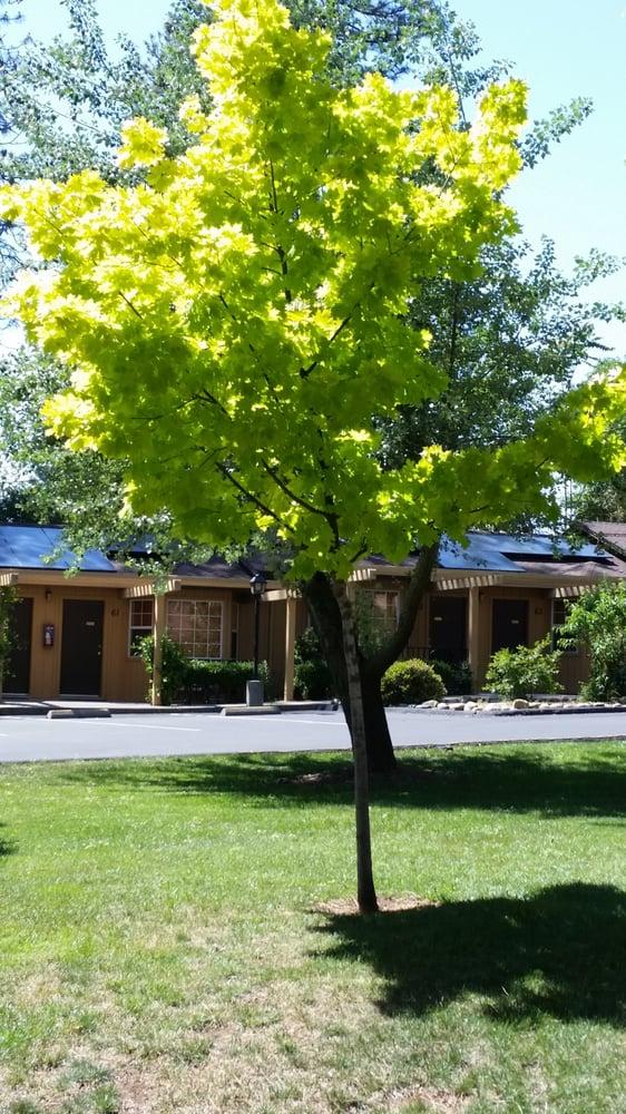 Ponderosa Gardens Motel 45 Beitr Ge Hotel 7010 Skwy Paradise Ca Vereinigte Staaten