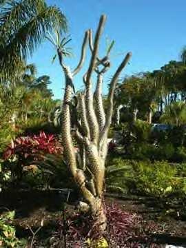 Photos For Florida Botanical Gardens Yelp